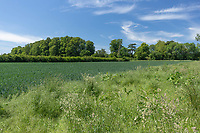 8-6-2021 Field margin <br /> ©Tim Scrivener Photographer 07850 303986<br />      ....Covering Agriculture In The UK....