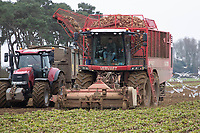 1-3-2021 Contractors lifting and carting sugar beet towards the end of the season in Lincolnshire.<br />  ©Tim Scrivener Photographer 07850 303986<br />      ....Covering Agriculture In The UK....