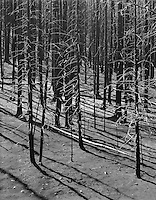 """""""Aftermath Of The 1988 Fires"""" <br /> Yellowstone National Park, Wyoming<br /> <br /> The fires which burned Yellowstone National Park in 1988 had a dramatic impact on the park's terrain. In the aftermath of the fires, this grove of trees shows that the burn was pretty complete in some areas. The gray colors of the terrain were perfectly suited for black and white photography. Light in this image was strong because the camera faced the general direction of the sun but I still increased film development time to expand image contrast and enhance the overall feeling of starkness in the photograph."""