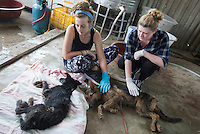 Scottish vegan activist Jess Henderson and English activist Helen Reed pet dogs ready to be saved by the Animal Hope and Wellness Foundation at a dog slaughterhouse in Yulin during the Yulin Dog Meat Festival, Yulin, Guangxi Province, China, 21 June 2016.<br /> <br /> Photo by STR / Sinopix