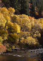Provo River Canyon Autumn Fall Colors Utah UT America US USA