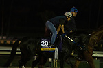 ARCADIA, CA  OCTOBER 26: Breeders' Cup Distaff entrant Midnight Bisou, trained by Steven M. Asmussen, exercises in preparation for the Breeders' Cup World Championships at Santa Anita Park in Arcadia, California on October 26, 2019. (Photo by Casey Phillips/Eclipse Sportswire/CSM)
