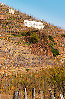 Graphic geometric vineyard with vines trained in 'en echalat' with supporting wooden stakes, winter pruned with no branches or leaves. Sign M Chapoutier in the background. Very steep hill slope. Terraced vineyards in the Cote Rotie district around Ampuis in northern Rhone planted with the Syrah grape. Ampuis, Cote Rotie, Rhone, France, Europe