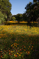 Fields of Indian Blankets and Coreopsis wildflowers paint the Texas Hill Country