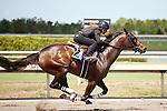 #90Fasig-Tipton Florida Sale,Under Tack Show. Palm Meadows Florida 03-23-2012
