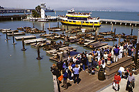 San Francisco, California - Tourists Watching Sea Lions, Pier 39, Fisherman's Wharf.  Tourist Boat Returning from San Francisco Bay Cruise.