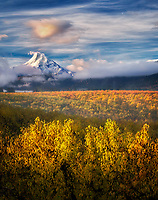 Pear orchard in fall color and Mt. Hood. Hood River Valley, Oregon