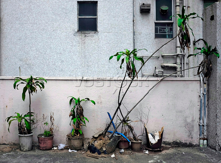 Hongkong, China, Asien, urbane Flora<br />  ***Keine Social_Media Nutzung***<br /> <br /> Engl.: Asia, China, Hong Kong, urban flora, plant, flowers, wall, house, facade<br /> ***No social media use***