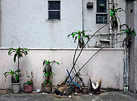 Hongkong, China, Asien, urbane Flora<br />  ***Keine Social_Media Nutzung***<br /> <br /> Engl.: Asia, China, Hong Kong, urban flora, plant, flowers, wall, house, facade<br /> ***No social media use***