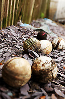 Selection of old and used cricket balls lie grouped off the pitch during Essex CCC vs Worcestershire CCC, LV Insurance County Championship Group 1 Cricket at The Cloudfm County Ground on 10th April 2021