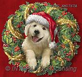 Marcello, CHRISTMAS ANIMALS, WEIHNACHTEN TIERE, NAVIDAD ANIMALES, paintings+++++,ITMCXM1767A,#XA# ,Christmas wreath ,dog