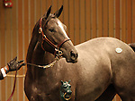 12 September 2010.  Hip #34 Tale of the Cat - Ecology filly sold for $300,000 at the Keeneland September Yearling Sale.  Consigned by Paramount Sales.
