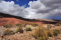 BOLIVIA - PULACAYO MINE AREA<br /> Brilliantly coloured rocks rise beside the road and a mineral-rich stream reveals streaks of blue, yellow, red and green. Foreground :Stipa frigida grass cushion<br /> <br /> Full size: 69,2 MB