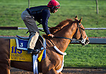 October 27, 2014:  V E Day, trained by Jimmy Jerkens, exercises in preparation for the Breeders' Cup Classic at Santa Anita Race Course in Arcadia, California on October 27, 2014. Scott Serio/ESW/CSM
