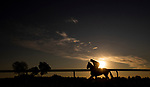 November 2, 2020: Swiss Skydiver, trained by trainer Kenneth G. McPeek, exercises in preparation for the Breeders' Cup Distaff at Keeneland Racetrack in Lexington, Kentucky on November 2, 2020. Alex Evers/Eclipse Sportswire/Breeders Cup