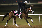 DUBAI,UNITED ARAB EMIRATES-MARCH 23: Master Plan,trained by Todd Pletcher,exercises in preparation for the UAE Derby at Meydan Racecourse on March 23,2017 in Dubai,United Arab Emirates (Photo by Kaz Ishida/Eclipse Sportswire/Getty Images)
