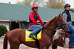 LOUISVILLE, KY -APR 25: Kentucky Derby hopeful Flameaway goes to the track to train for the Kentucky Derby at Churchill Downs, Louisville, Kentucky. (Photo by Mary M. Meek/Eclipse Sportswire/Getty Images)