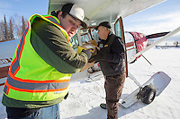 Volunteers help load Volunteer Iditarod Air Force pilot,Monte Mabry's plane with musher drop bags, people food and HEET  at the Willow, Alaska airport during the Food Flyout on Saturday, February 20, 2016.  Iditarod 2016