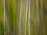 """""""PONDERING ASPEN""""<br /> <br /> Leafless aspen reflecting in the rippling waters of a Montana pond. ORIGINAL 24 X 36 GALLERY WRAPPED CANVAS SIGNED BY THE ARTIST $2,500. CONTACT FOR AVAILABILITY."""