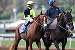 SEP 27,2014:Sky Preacher,ridden by Tyler Baze,appears the track in FrontRunner Stakes at Santa Anita Park in Arcadia,CA. Kazushi Ishida/ESW/CSM