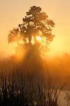 Sun filters through palms, pines, and reeds, Everglades National Park, Florida, USA