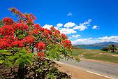 Flamboyant, paysage de Nouvelle-Calédonie
