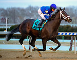 OZONE PARK, NEW YORK: MAR 10: *, #9 Enticed, ridden by Junior Alvarado, wins the Gotham  Stakes for 3 year olds, Aqueduct  Racetrack, on March 10, 2018 in Ozone Park, New York. ( Photo by Heary /Eclipse Sportswire/Getty Images)