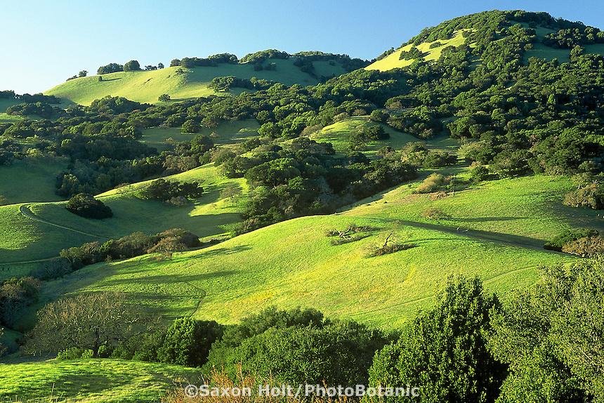 Spring green hills - Mt. Burdell, Novato, California