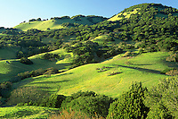 Spring green hills - Mt. Burdell, Novato, California