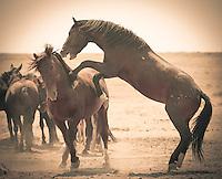This is gonna hurt! Wild Horses - Utah