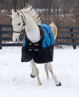 Gander, and white Thoroughbred Passionforfashion