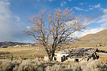 U.S.A., America, Nevada, Reese River Valley, Lander County, Highway 305 South, Abandoned ranch, Western high desert,