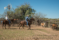 Arizona Cowboy Roping cattle to brand Cowboy Cowboy Photo Cowboy, Cowboy and Cowgirl photographs of western ranches working with horses and cattle by western cowboy photographer Jess Lee. Photographing ranches big and small in Wyoming,Montana,Idaho,Oregon,Colorado,Nevada,Arizona,Utah,New Mexico. Fine Art Limited Edition Photography Of American Cowboys and Cowgirls by Jess Lee