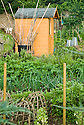 Tool shed and wooden cloches on an allotment vegetable plot, mid June.