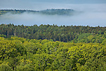Fog rising in Eggemoggin Reach, Deer Isle, ME, USA