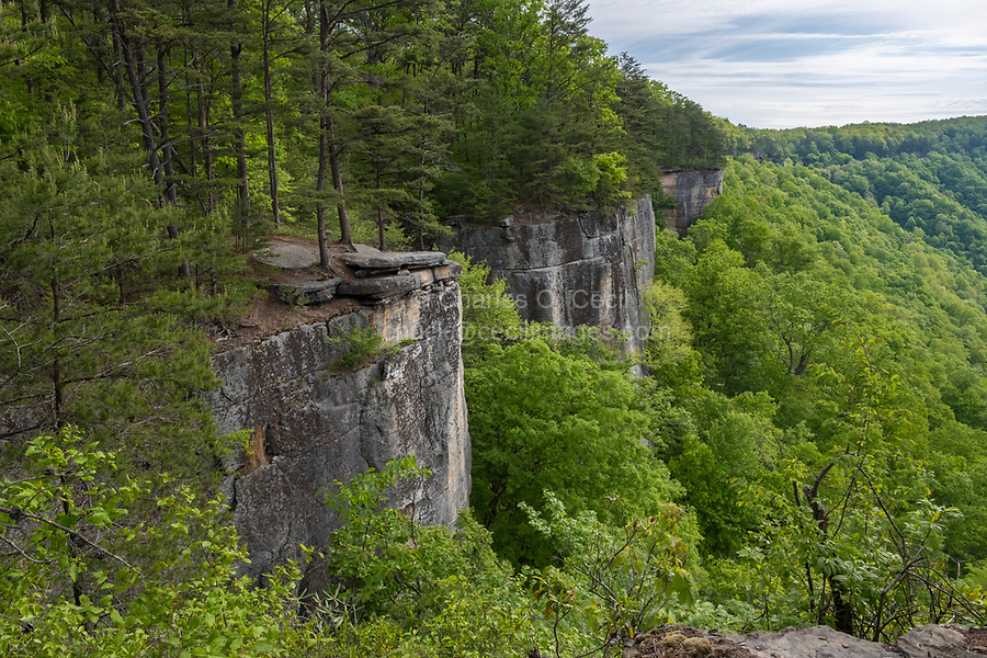 New River Gorge National Park, West Virginia.  View along the Endless Wall Trail.