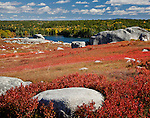 Autumn colors the blueberry fields in Blue Hill, Midcoast ME