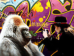 """GRUMPY GORILLA<br /> A member of the public pictured taking a picture of a piece of art entitled """"Urban Gorilla"""" by Paul James at the Sol Gallery stand at the opening of Art Source Ireland's premier art show held in the RDS, Dublin."""