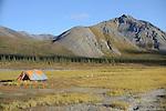 Campers preparing to float The Sheenjek River set up their tent in  Alaska's Brooks Range near Ambresvajun (Last) Lake in the Arctic National Wildlife Refuge in late August.