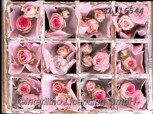 Interlitho-Alberto, FLOWERS, BLUMEN, FLORES, photos+++++,roses pink,KL16544,#f#, EVERYDAY ,rose,roses,