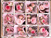 Interlitho-Alberto, FLOWERS, BLUMEN, FLORES, photos+++++,roses pink,KL16544,#f#, EVERYDAY ,rose,roses,