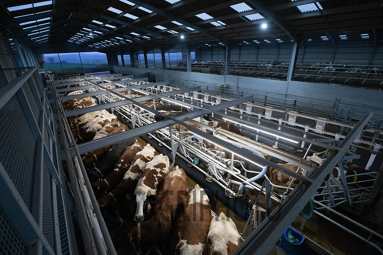10/12/2020 Milking Dairy cows<br /> ©Tim Scrivener Photographer 07850 303986<br />      ....Covering Agriculture In The UK....