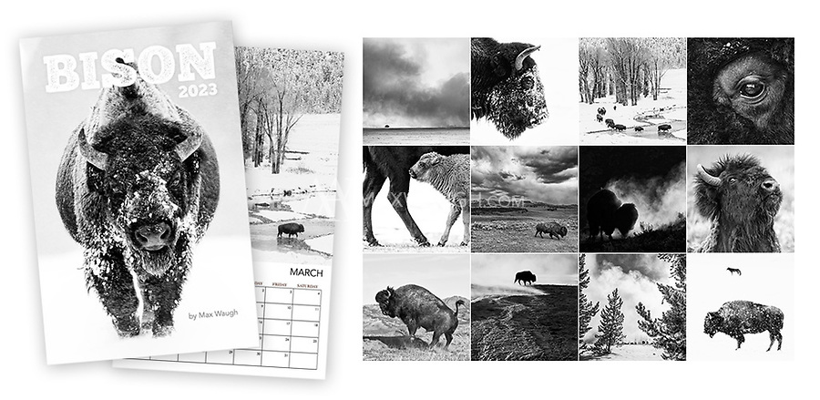 """**For international orders, please click on the red text in the top right corner.**<br /> <br /> The 2022 Yellowstone Wolves calendar features photos of wild wolves taken in Yellowstone National Park over the years.<br /> <br /> **This is a Classic calendar, meaning it features the same images as last year's version.**<br /> <br /> Each month's photo measures a full 11 x 11, so these calendars now look even better on your wall. Calendars are printed on full 11"""" x 17"""" pages, spiral-bound at the top. Each interior page contains an image and full calendar for the month, so they are the equivalent of an 11"""" x 8.5"""" calendar that is folded open. Note that these calendars do not come with a pre-punched hole for hanging."""