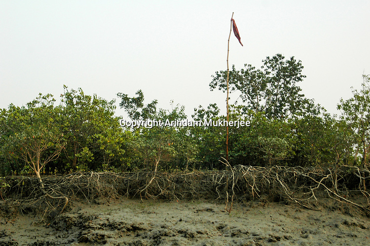 A 'jhamti' in Sunderban tiger reserve. A jhamti is a cloth tied high above the ground either on a pole or a tree to notify all forest goers that tiger has attacked/killed human in recent times in that area. Sunderbans, West Bengal, India. Arindam Mukherjee.