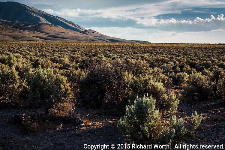 Sagebrush, the Nevada State Flower, stretches to a horizon where it meets rolling hills and cloud-painted skies.