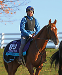 Sealiway, trained by trainer Frederic Rossi, exercises in preparation for the Breeders' Cup Juvenile Turf at Keeneland Racetrack in Lexington, Kentucky on November 2, 2020.