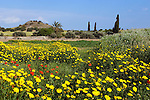 CYPRUS, landscape in springtime between Nicosia and Larnaca<br />