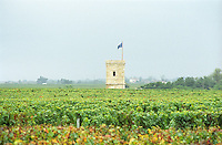 View over the vineyards. Chateau Pomys, Saint Estephe. Medoc, Bordeaux, France
