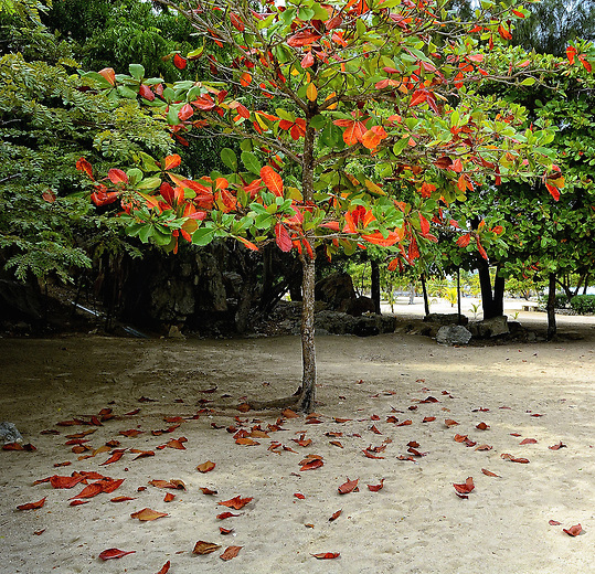 Fall in the Carribean