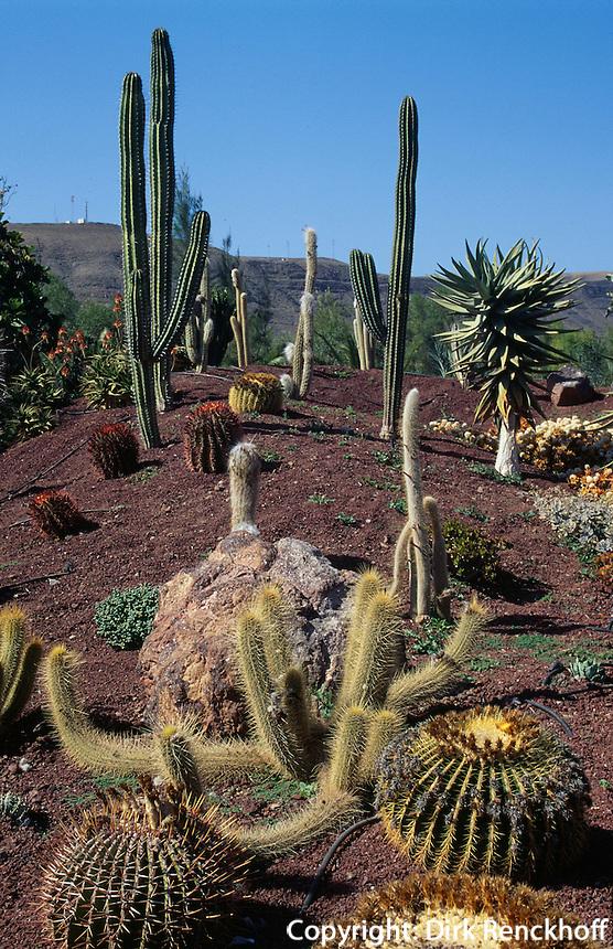 Spanien, Kanarische Inseln, Fuerteventura, Kaktusgarten in Lajita
